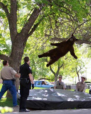 bear falling.jpg